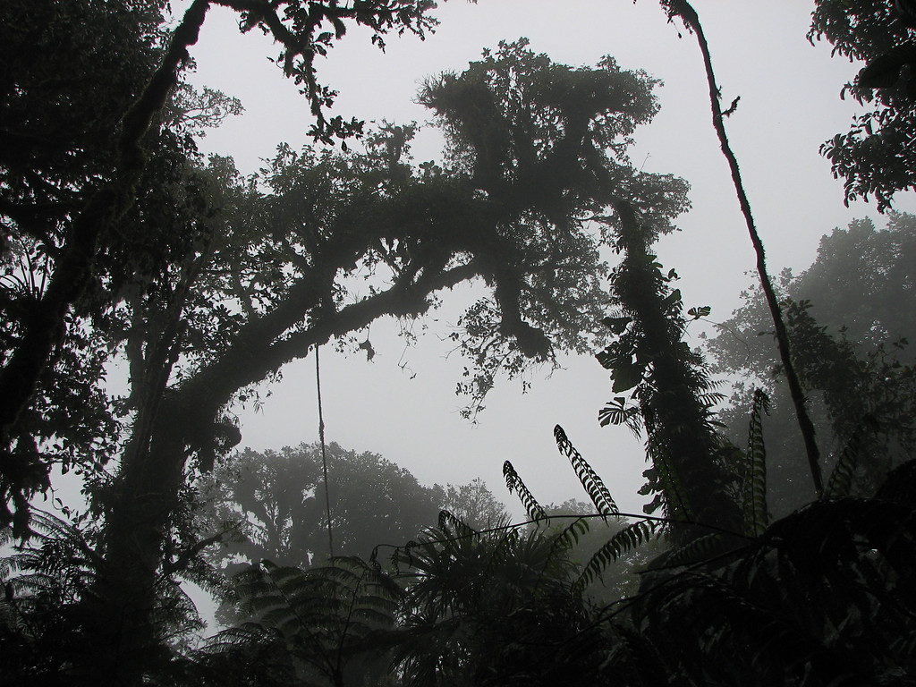 Forest at Alberto Manuel Brenes Biological Reserve, Costa Rica