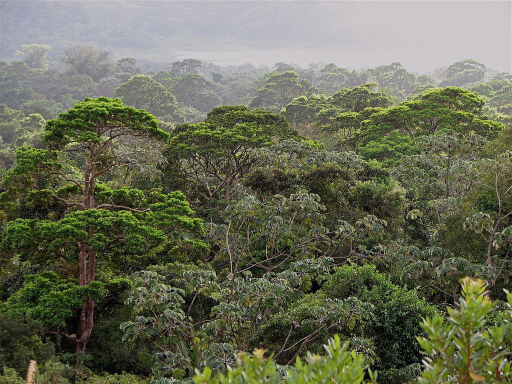 Forest near Volcan Arenal, Costa Rica