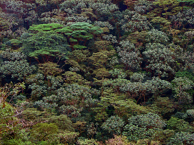 100 shades of green: forest canopy across a ravine, Alberto Manuel Brenes Biological Reserve, Costa Rica