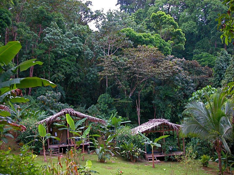 Faculty heights, Campanario, Osa Peninsula, Costa Rica