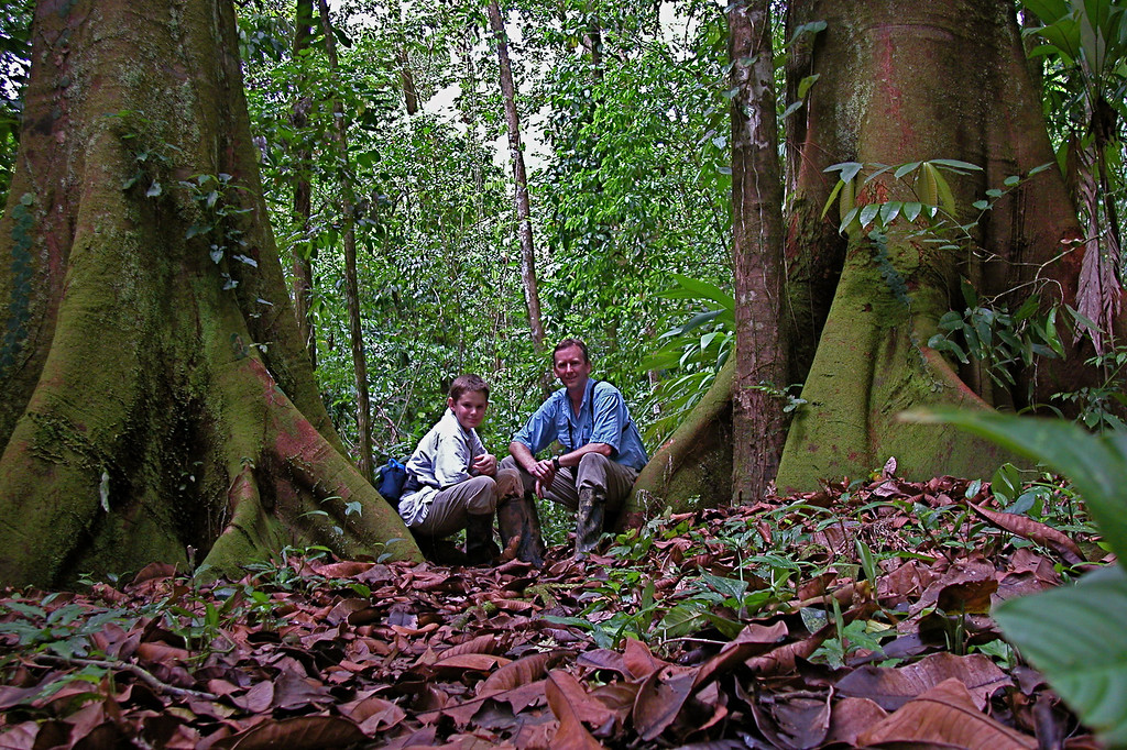Resting on buttresses of the vaca tree (Brosimum utile) along the trail between San Pedrillo and Llorona, Corcovado National Park, Costa Rica