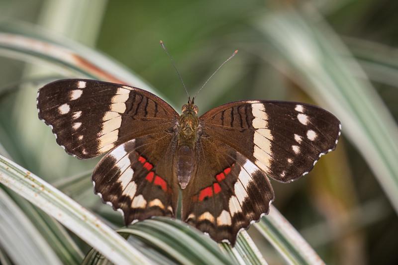 Selva Verde, Chilamate, Costa Rica, 2017