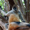 03-13 Spider Monkey @ Playa Matapalo, Costa Rica