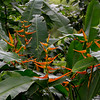 Bird of Paradise Plants