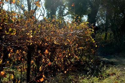 Hérault : Couleurs d'automne