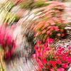 Flowertrails