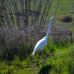 Coyote Hills Regional Park-3/10/14