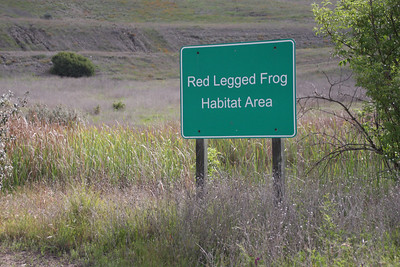 The landfill has set aside wetlands specifically to harbor the endangered Red-Legged Frog.