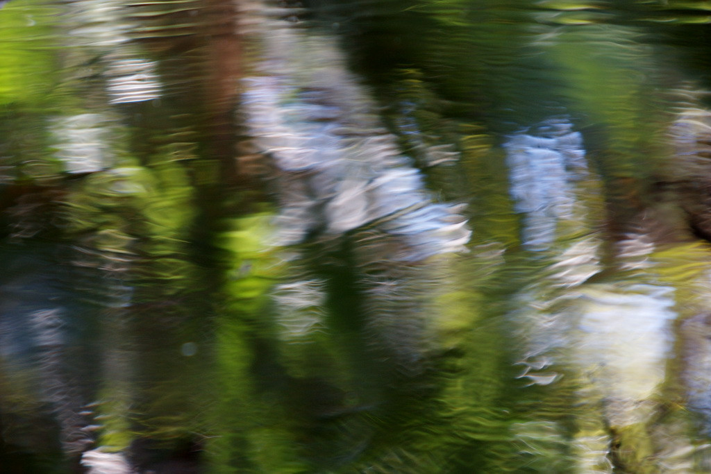 9727-1 By slowing down the shutter speed, I managed to create an abstract image of the waters surrounding the departing bot fly.