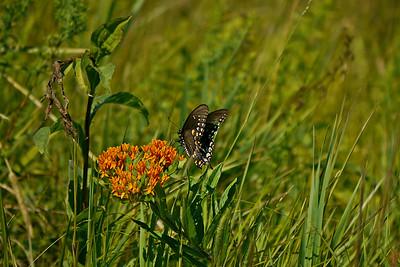 Crane Wildlife Management Area - July 13, 2014