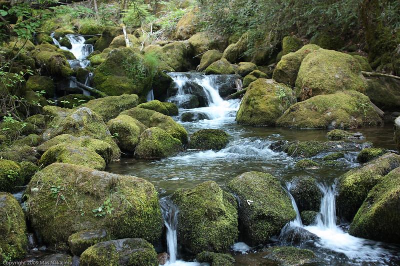 Below Watson Fall, Highway 138 in Umpqua National Forest, Oregon