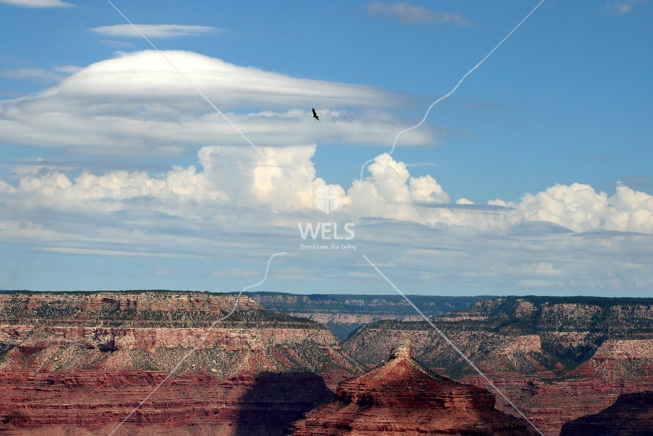 Bird above the Grand Canyon by tluecke