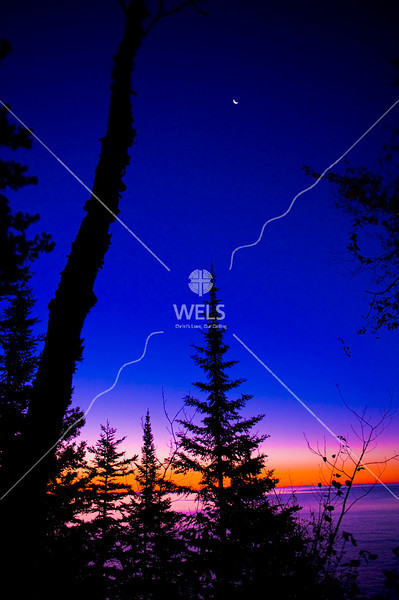 Trees Against Sunrise by wpekrul