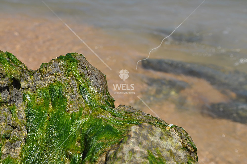 Algae on Rock by lpappalardo