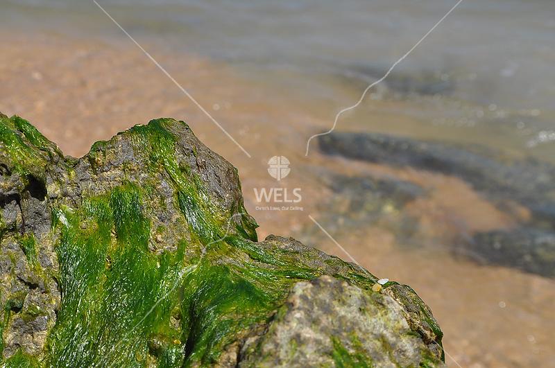 Algae on Rock by lpappalardo