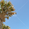 Palm against sky by lpappalardo