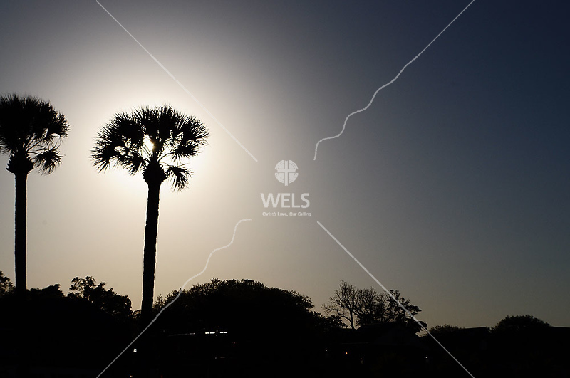 Palm against sunset by lpappalardo
