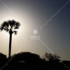 Palm against sunset by lpappalardo