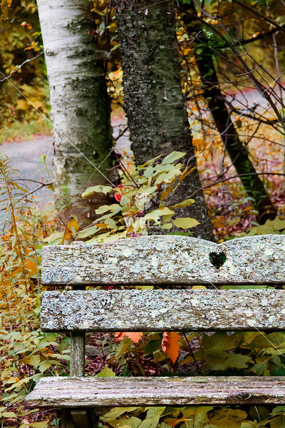 Autumn Setting by mspriggs
