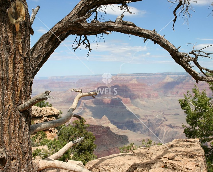Tree framed view of the  Grand Canyon by tluecke