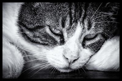 Sleepy Jack