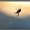 Spider after sunset