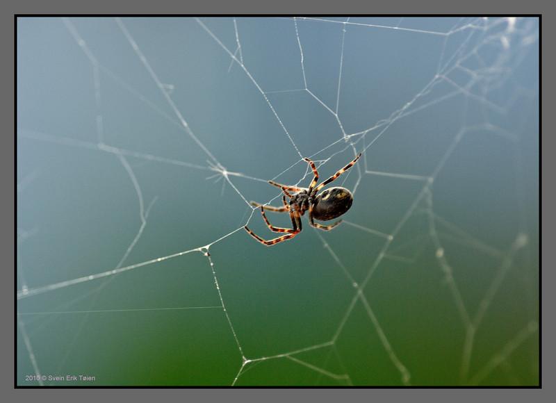 Mending the net<br /> Spider. Bodø