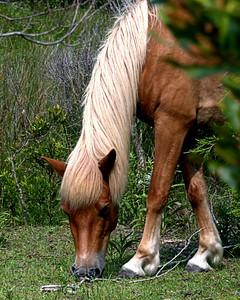 Shackleford Horses 4813