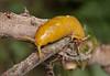 Banana Slug...