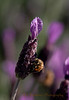 Bee Fine