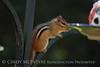 Chipmunk on birdfeeder