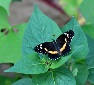 2015-09-19  Bordered Patch