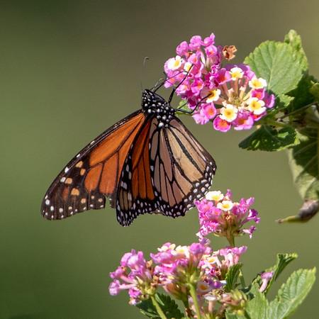 2019-11-10  Monarch