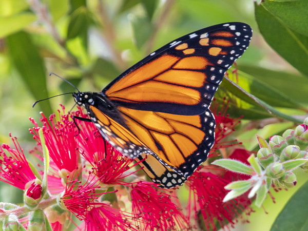 2019-04-16  Monarch