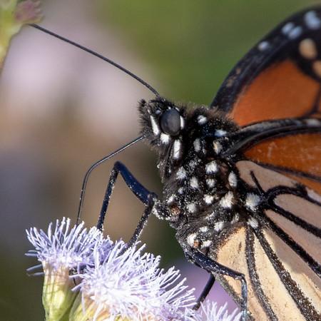 2019-11-11  Monarch