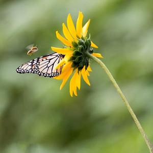 2017-08-06  Woodland Lake Park, Pinetop, Arizona