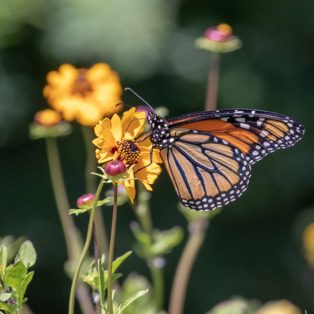 2019-04-19  Monarch