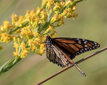 2020-10-14  Monarch