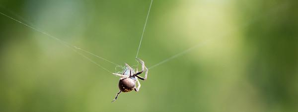 2016-03-25  Spider