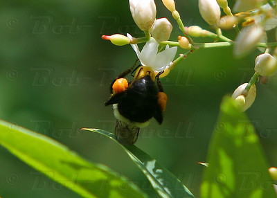Bees_0239