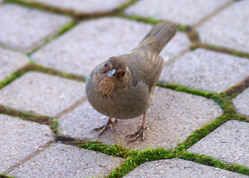 Another bird admires my camera.