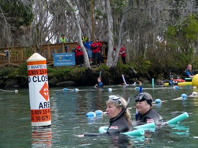 Manatee Rescue Feb. 2012