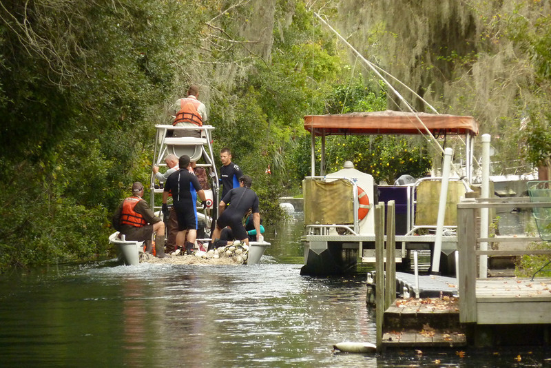 Entering side canal in pursuit of injured manatee