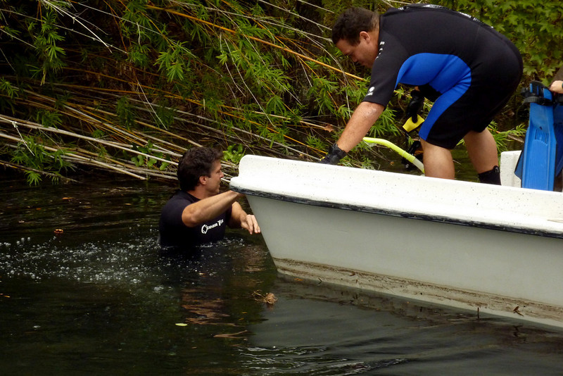 Ivan Vicente prepares to maneuver injured manatee into rescue net.