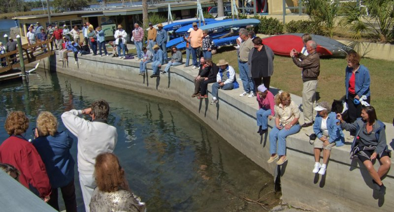 75 people arrived to watch the re-introduction of the manatees (109844586)