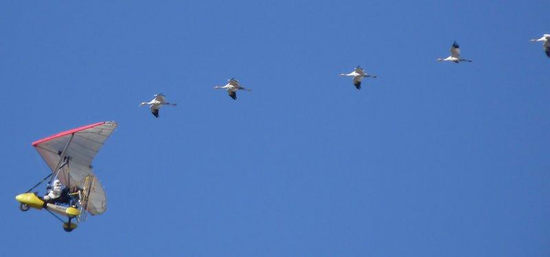 Seven birds following the ultralight (108421754)