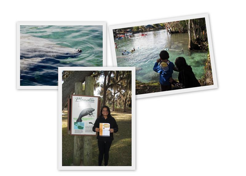 Manatee Viewing at Crystal River Wildife Refuge, Florida