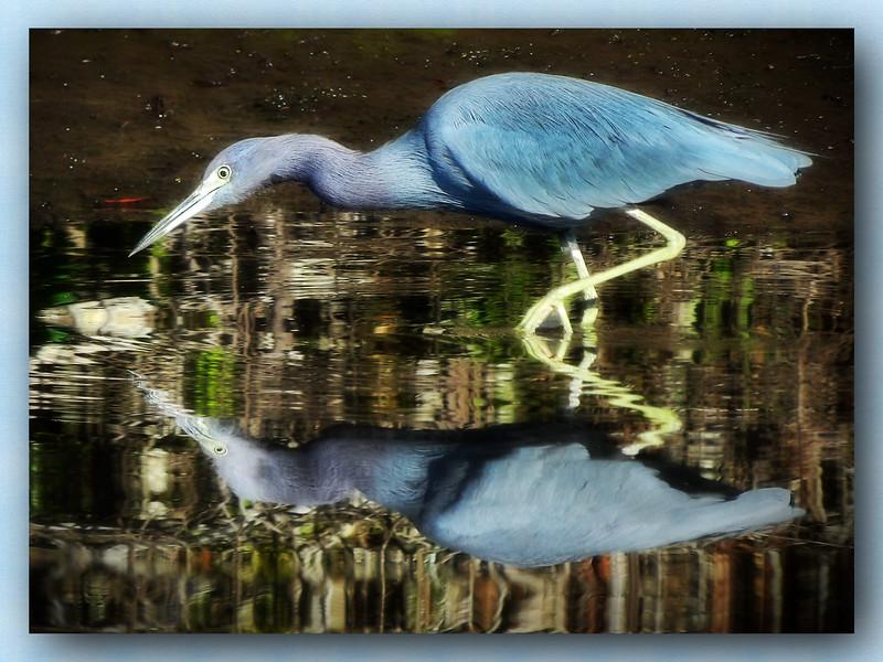 Blue Heron in Orton Effects