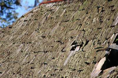 Cumberland_Island_01-2007_0010