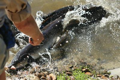 Eels! - Currumbin Wildlife Sanctuary  http://www.cws.org.au/   29-4-09